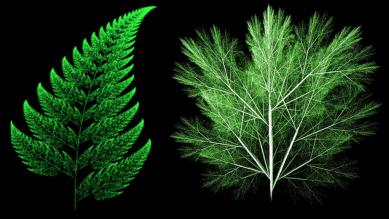 image-self-similar-leaf